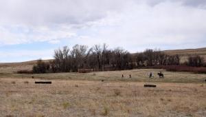 An Amateur Gun Dog brace competes in the Rocky Mountain Vizsla Club's Inaugural Walking Field Trial