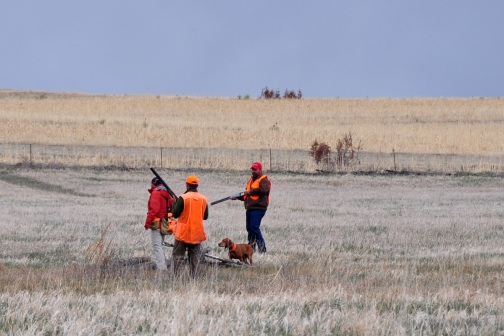 Aaron handles Kosmo in their callback for consideration of a placement in the Amateur Gun Dog stake in the Rocky Mountain Vizsla Club's Inaugural Walking Field Trial. The stake was an all-breed 4 point retrieving major.